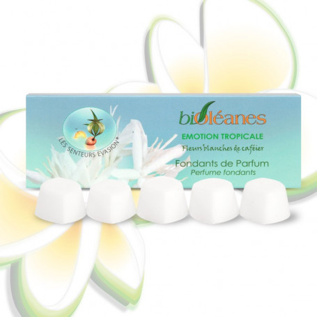 Fondants de parfums Émotion Tropicale